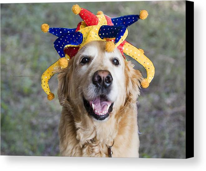 Party.party Animal Canvas Print featuring the photograph Party Animal by Bill Linhares