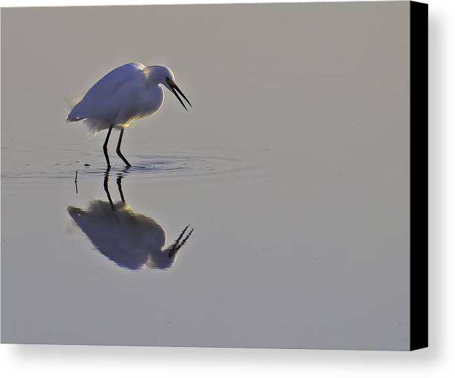 Nature Canvas Print featuring the photograph Reflections by Brian Wright