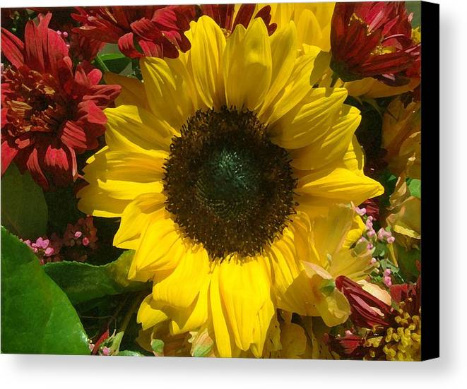 Sunflower Canvas Print featuring the photograph Sunflower Boquet by Jim Darnall