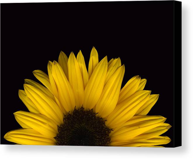 Scanography Canvas Print featuring the photograph Sunflower Rising by Deborah J Humphries