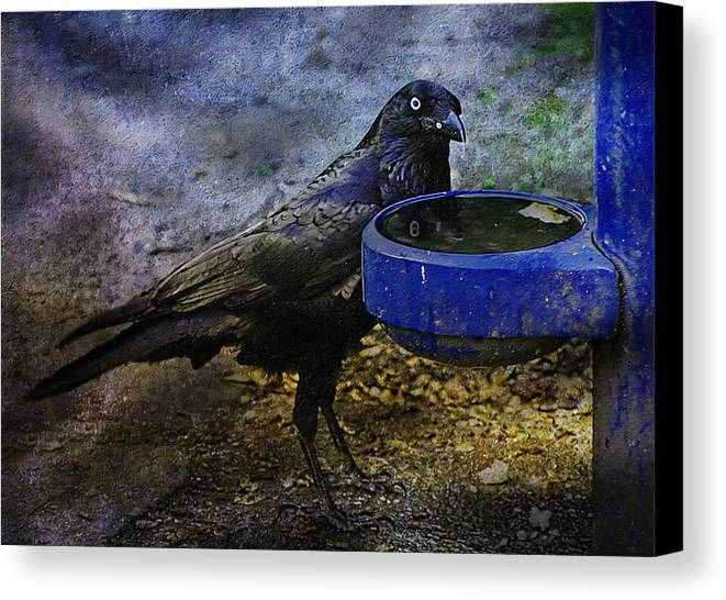 Crow Canvas Print featuring the photograph Taming Of The Crow by Georgiana Romanovna