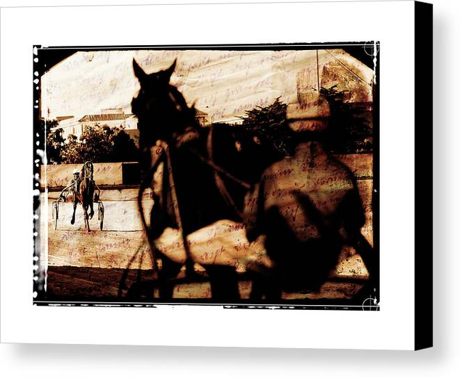 Horse Canvas Print featuring the photograph trotting 1 - Harness racing in a vintage post processing by Pedro Cardona Llambias