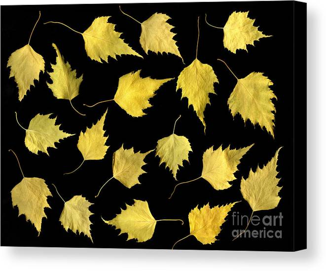 Scanography Canvas Print featuring the photograph When Leaves Grow Old by Christian Slanec