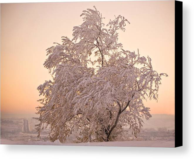 Winter Canvas Print featuring the photograph Winter Sunset by Marilyn Hunt