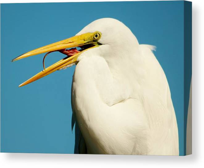 Egret Canvas Print featuring the photograph Great White Egret by Paulette Thomas
