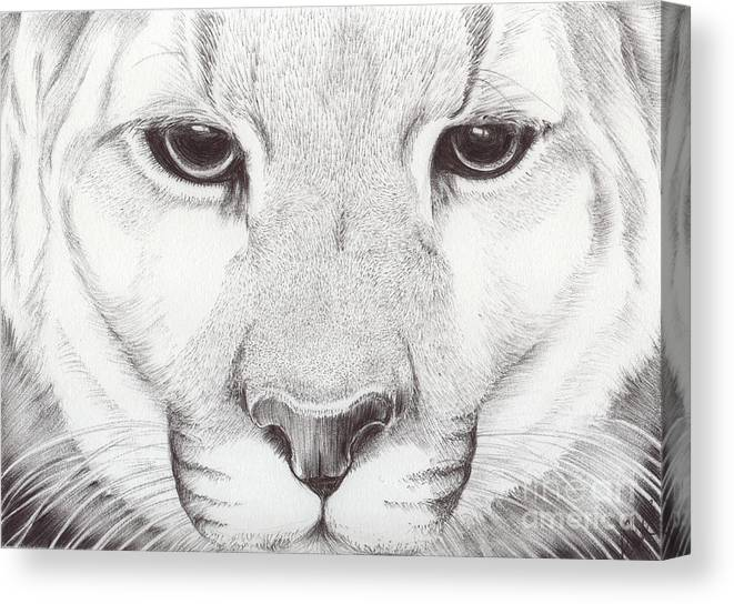 Mountain Lion Canvas Print featuring the drawing Animal Kingdom Series - Mountain Lion by Bobbie S Richardson