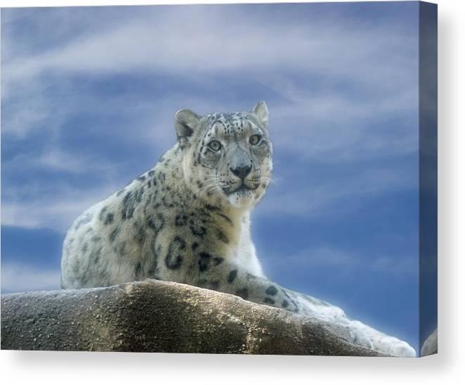 Snow Leopard Canvas Print featuring the photograph Snow Leopard by Sandy Keeton