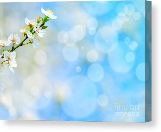 Blossoming Canvas Print featuring the photograph Spring Flowers Against Blue Bokeh Background by Aleksandar Mijatovic