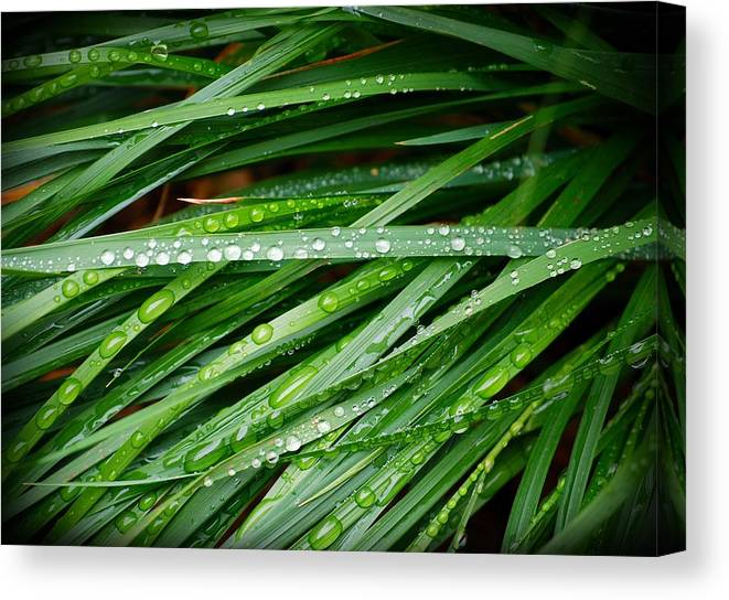 Grass Canvas Print featuring the photograph The Water Of Life by Andrew Jones