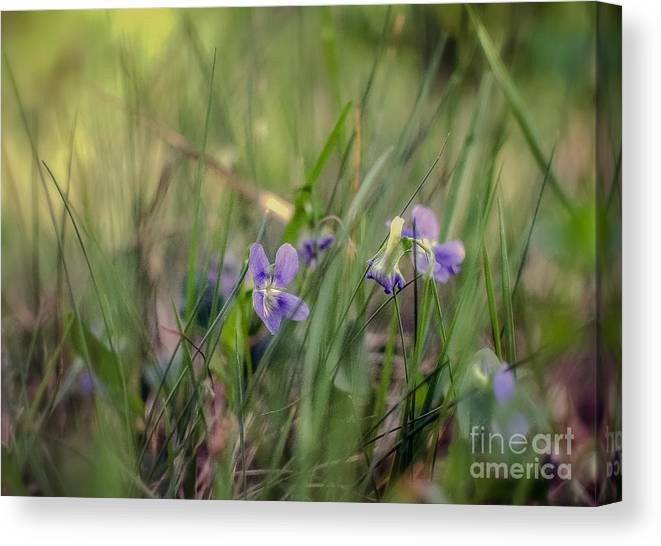 Nature Canvas Print featuring the photograph Without Rustling         by Lyudmila Prokopenko