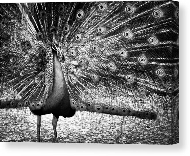 Colorless Beauty Queen Canvas Print featuring the photograph Colorless Beauty Queen by Jim Perpetos