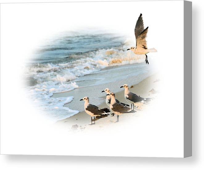 Out Of Bounds Canvas Print featuring the photograph Coming In For A Landing by Kristin Elmquist