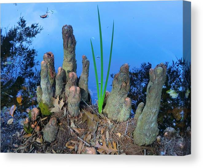 Knobs Canvas Print featuring the photograph Cypress Knobs by Mindy Newman