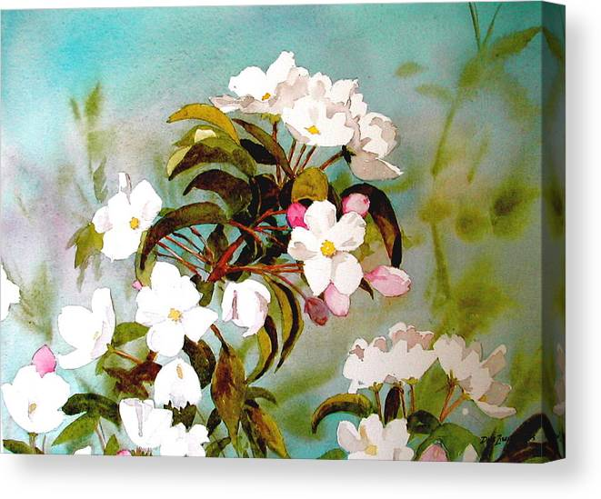 Blossoms Canvas Print featuring the painting Apple Blossoms by Faye Ziegler