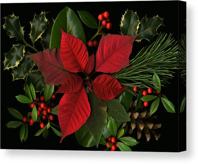 Poinsetta Canvas Print featuring the photograph Holiday Greenery by Deborah J Humphries