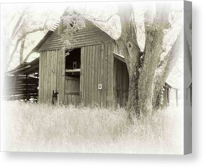 Barn Canvas Print featuring the photograph In The Pecan Orchard by Nelson Strong