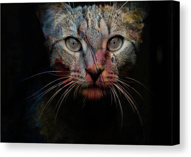 Cat Canvas Print featuring the photograph Mr Bo by Paul Lovering