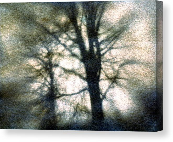 Trres Canvas Print featuring the photograph Original Tree by Diana Ludwig