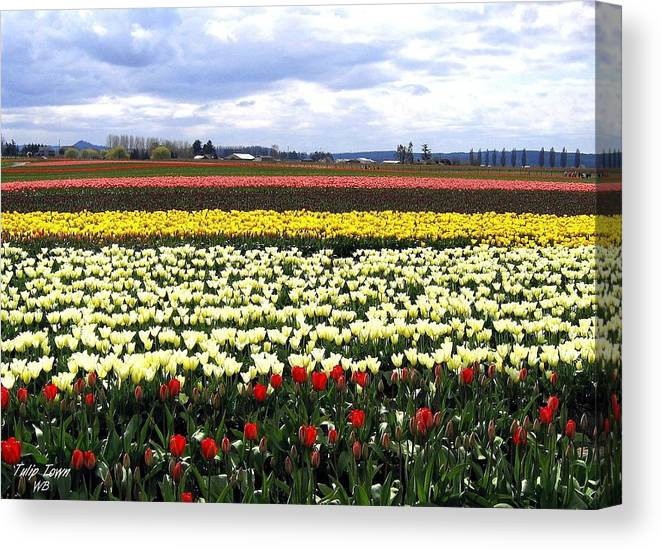 Agriculture Canvas Print featuring the photograph Tulip Town 4 by Will Borden