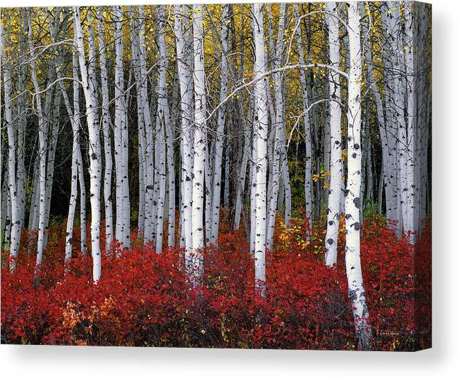Leland Howard Canvas Print featuring the photograph Light In Forest by Leland D Howard
