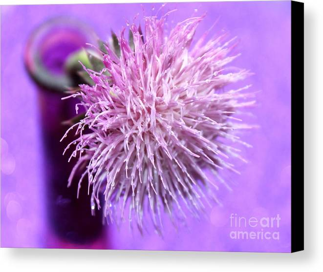 Purple Thistle Canvas Print featuring the photograph Dream In Violet by Krissy Katsimbras
