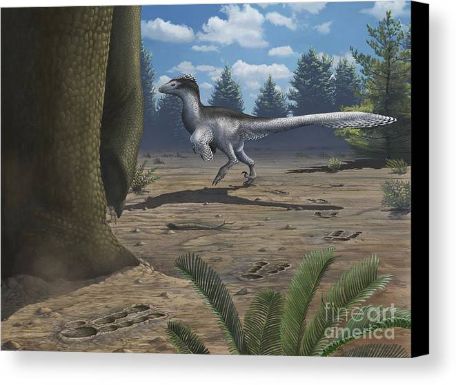 Paw Prints Canvas Print featuring the digital art A Deinonychosaur Leaves Tracks by Emily Willoughby