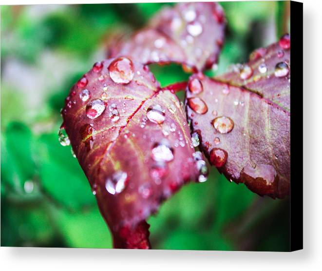 Water Drops Canvas Print featuring the photograph All Your Little Diamonds by Sarah Fatima