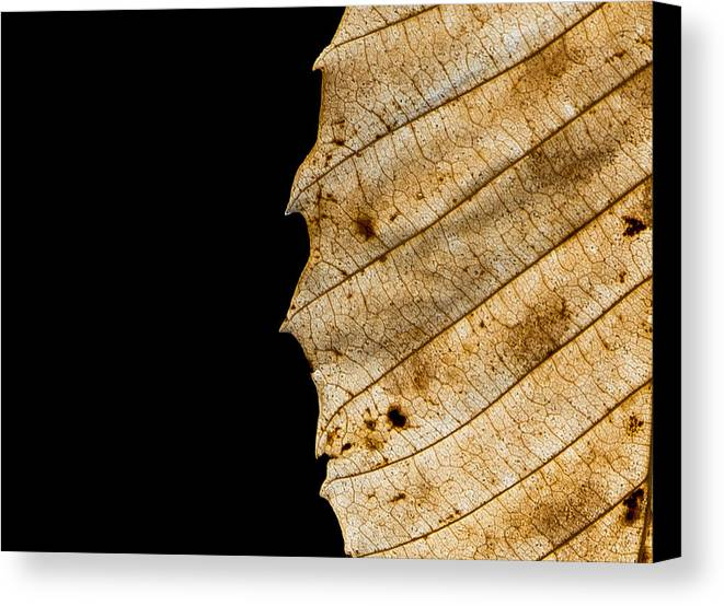 Leaf Canvas Print featuring the photograph Black Leaf by Jagged North