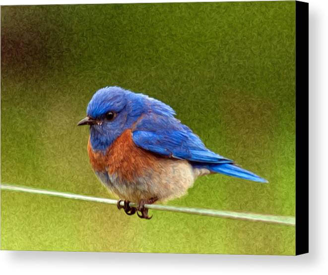 Animals Canvas Print featuring the photograph Bluebird Painting by Jean Noren