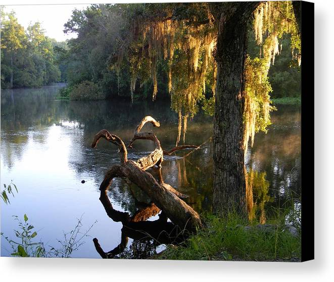 Early Light And Color Canvas Print featuring the photograph Early Light And Color by Warren Thompson