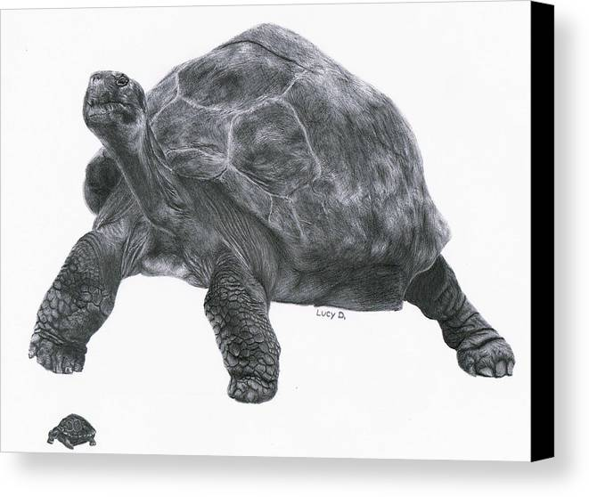 Giant Tortoise Canvas Print featuring the drawing Giant Tortoise by Lucy D