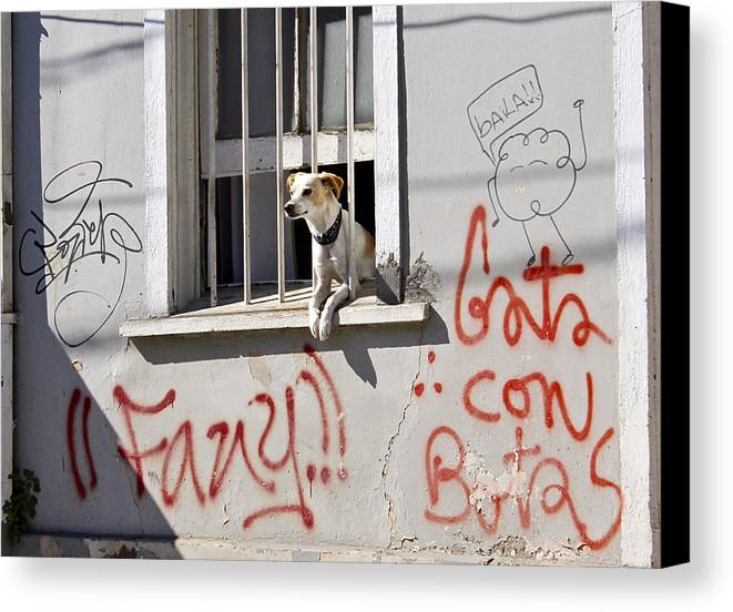 Dog Canvas Print featuring the photograph How Much Is That Doggie In The Window? by Kurt Van Wagner