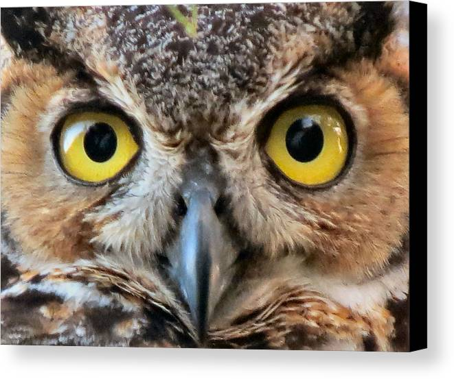 Owl Canvas Print featuring the photograph Look Into My Eyes by Kent Dunning