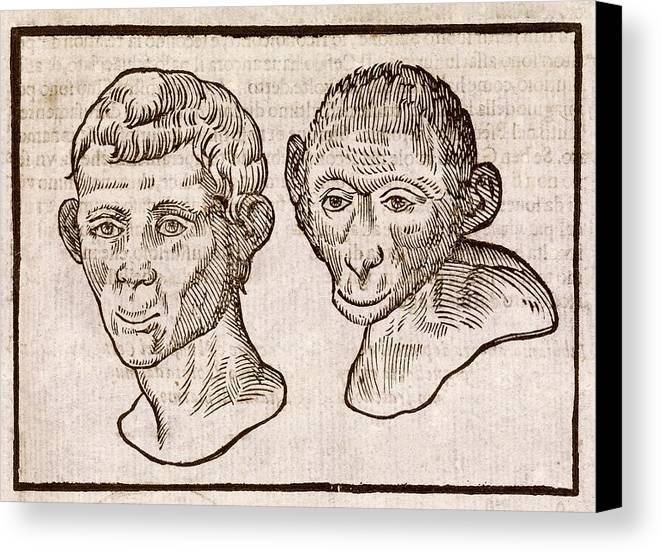 Human Canvas Print featuring the photograph Man And Monkey's Head by Middle Temple Library