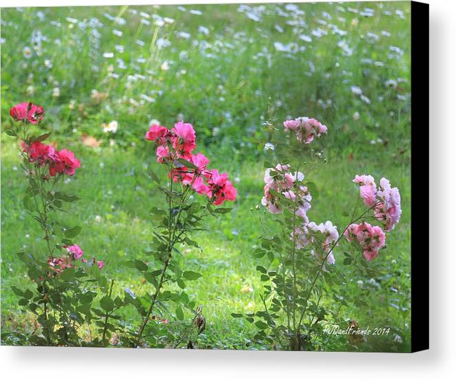 Roses Daisies Canvas Print featuring the photograph Pinks And Daisies by PJQandFriends Photography