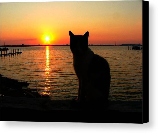 Cats Canvas Print featuring the photograph Waiting For The Shrimpers To Come In With Their Catch by Julie Dant
