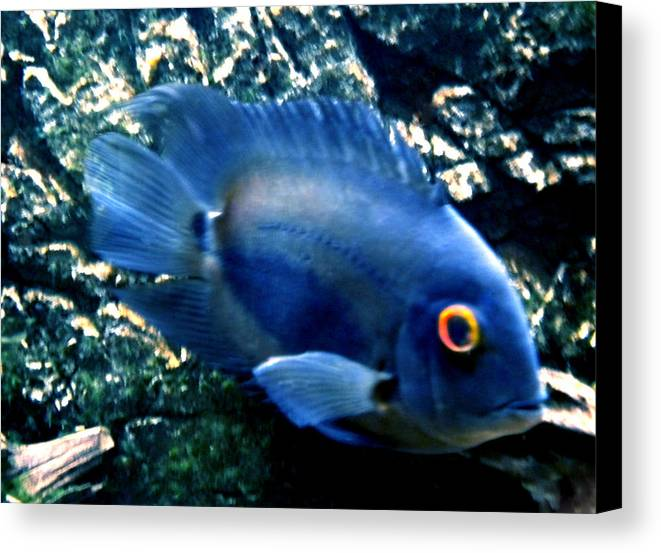 Colette Canvas Print featuring the photograph Fish Living In Denmark by Colette V Hera Guggenheim