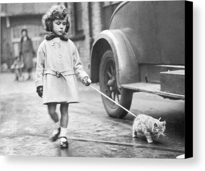 6-7 Years Canvas Print featuring the photograph Kitten On Lead by Fox Photos
