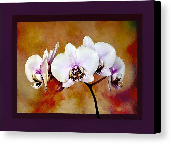 Orchids Canvas Print featuring the painting Orchids by Mary Morawska