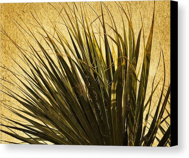 Fine Art Nature Canvas Print featuring the photograph Palm Leaves 1 by Stuart Brown