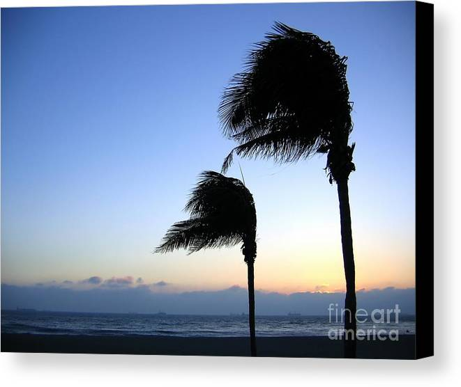 Solitude Canvas Print featuring the photograph Palm Trees Swaying In The Wind by Yali Shi