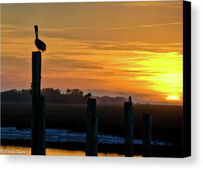 Chas Canvas Print featuring the photograph Pelican Sunset by Calvin Smith