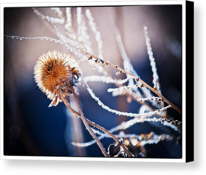 Nature Canvas Print featuring the photograph Road Side Plant by Lisa Spencer