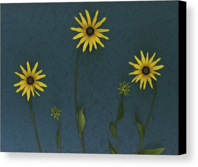 Arranged Canvas Print featuring the photograph Three Yellow Flowers by Deddeda