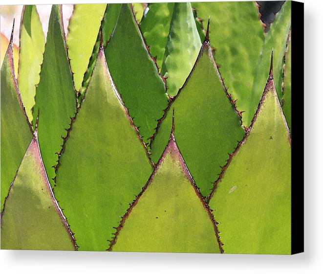 Cactus Canvas Print featuring the photograph Agave by Robert Gladwin