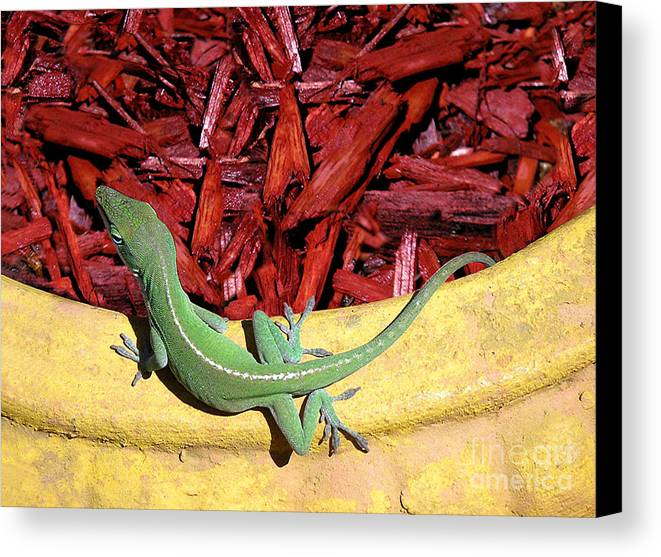 Nature Canvas Print featuring the photograph Anole Getting A Better Look by Lucyna A M Green