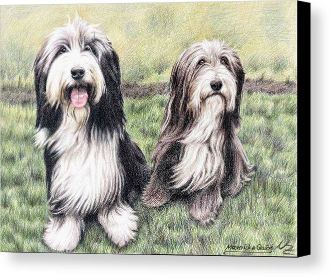Dogs Canvas Print featuring the drawing Bearded Collies by Nicole Zeug