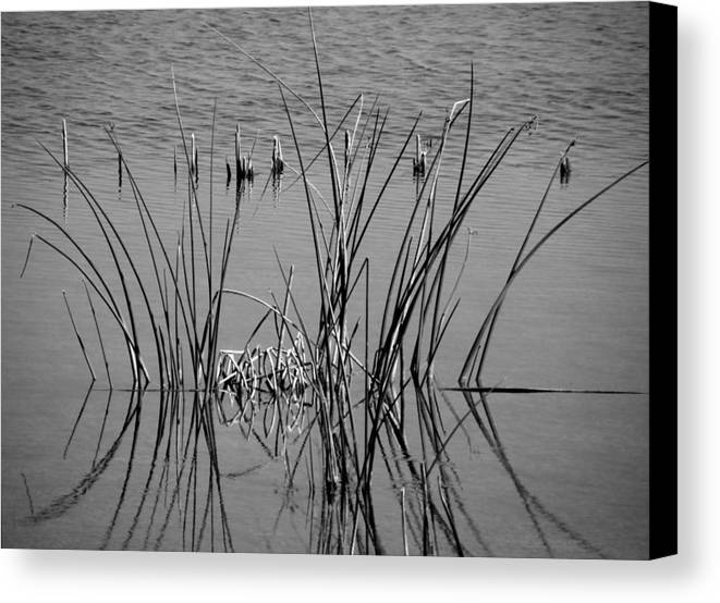 Marsh Canvas Print featuring the photograph Black And White Marsh Design by Rosalie Scanlon