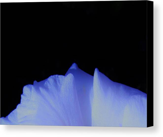 White Flowers Canvas Print featuring the photograph Frozen by Sharon Ackley