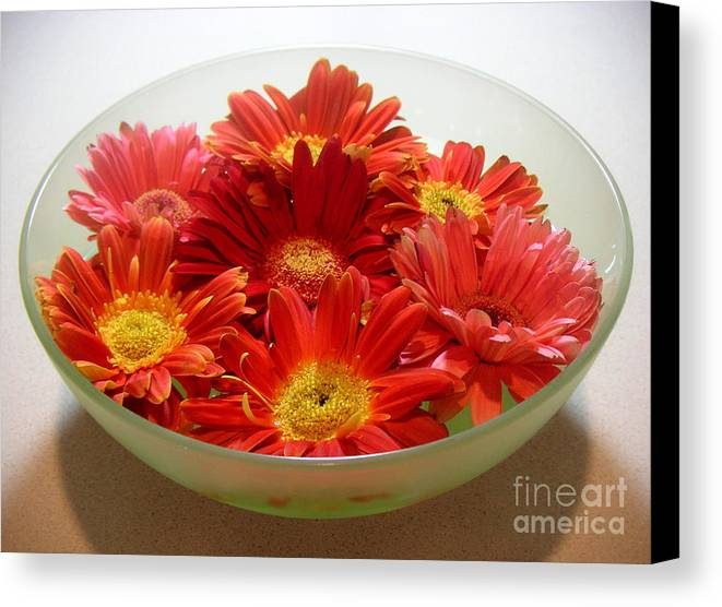 Nature Canvas Print featuring the photograph Gerbera Daisies - A Bowl Full by Lucyna A M Green